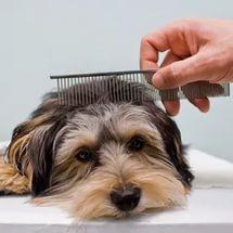 Как подстричь домашнего питомца в домашних условиях